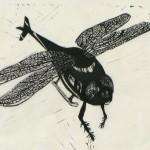 Heliofly